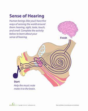 FREE Hearing Impairment Essay - ExampleEssays